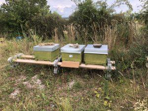Lehrbienenstand Käswasserr